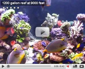 1200 gallon reef at 9000 feet