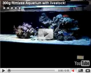 300g Rimless Aquarium with livestock!