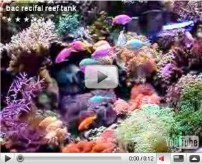 bac recifal reef tank