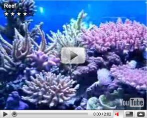 Bon's Reef Tank