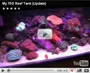 CunningStunt123's 75G Reef Tank nov 07