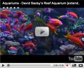David Saxby's Reef Aquarium (extended version)