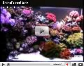 Shinai's reef tank