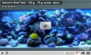 Ganzel's Reef Tank – 130 g. – 70 g. sump – december 2008