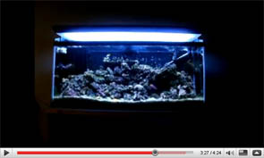 Kraylen's 55 Gallon Reef Tank of Madness