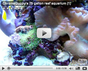 ChromeGuppy's 75 gallon reef aquarium part 1
