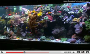 David Saxby's Reef Aquarium 2009