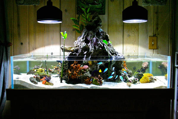 75 Gallon Reef Tank