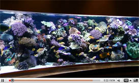 18 Feet Long Reef Tank – Amazing