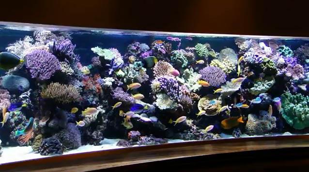 18-foot-reef