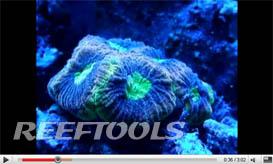 Kraylen's Reef – Nov 16th 2009