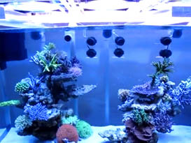 DSPS tank from Thailand II Video