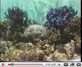Waikiki Aquarium Hawaii video