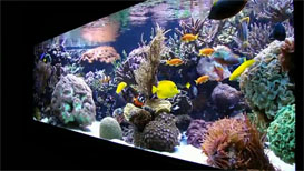 Manuel's In-Wall Reef Aquarium