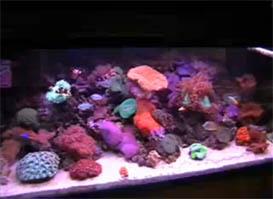 My 75 Gallon Reef Tank – Update