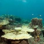 Global Warming Threatens Coral Reefs