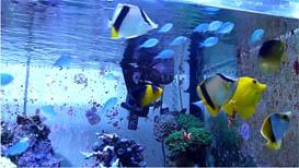 Reef Feeding Frenzy in HD