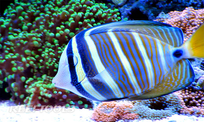 how to cycle a saltwater fish tank