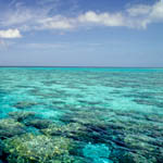 Propagation program to save Florida Keys coral reefs