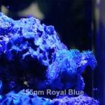 Ecoxotic PAR38 LED Aquarium Light on Nano Tank