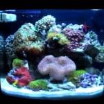 jbj nano-cube 12 gallon reef tank