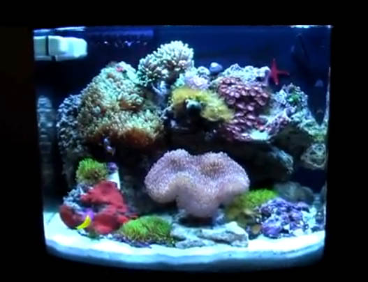 Recent news reef tools part 74 for Saltwater fish for 10 gallon tank