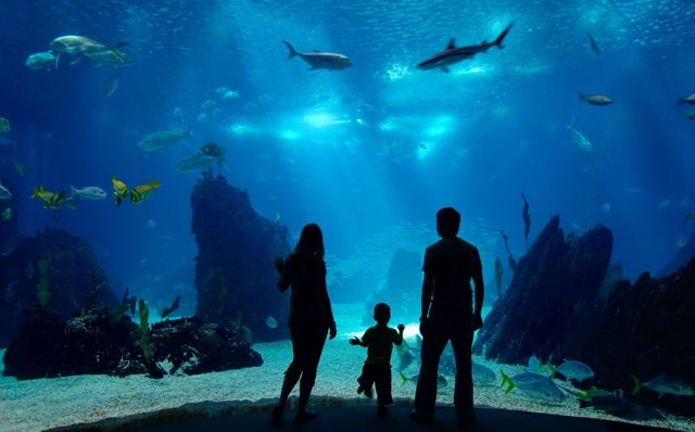 70 000 Square Feet Public Aquarium To Be Built In