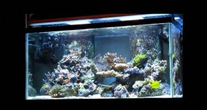 120 gallon reef tank