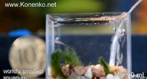 World S Smallest Aquarium In Hd Reef Tools