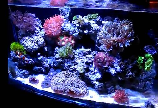 kessil a150w aquarium led light videos from atlantis aquarium reef