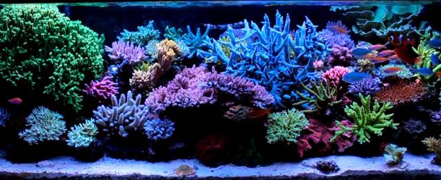Krzysztof Tyrc S Amazing Reef Tank Video Reef Tools
