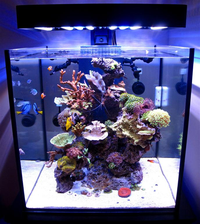 Solana 60 Gallon Cube With Ecoxotic Panorama Led Fixture