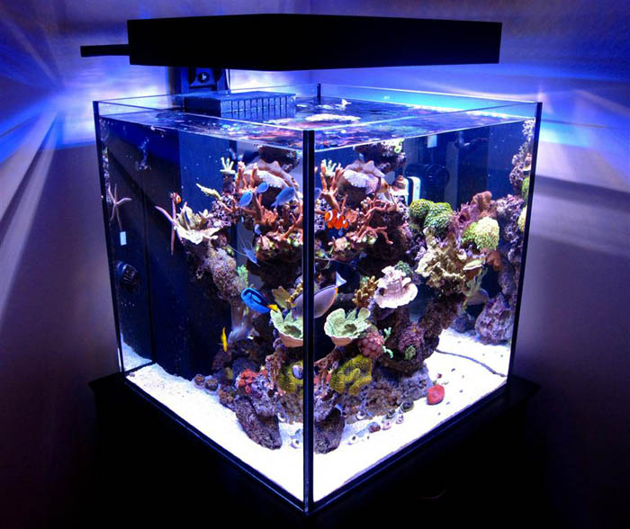 Saltwater Fish Tank 60 Gallon Large Marine Aquarium 60