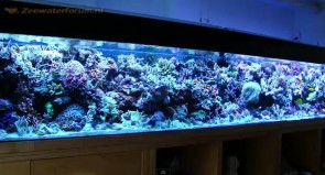 large-reef-tank