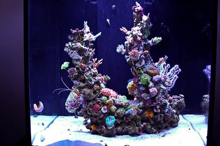 Minimalist Aquascaping Reef Tools