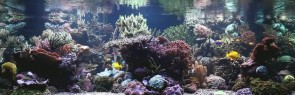 stuart-bertram-reef-tank