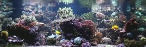 stuart-bertram-reef-tank