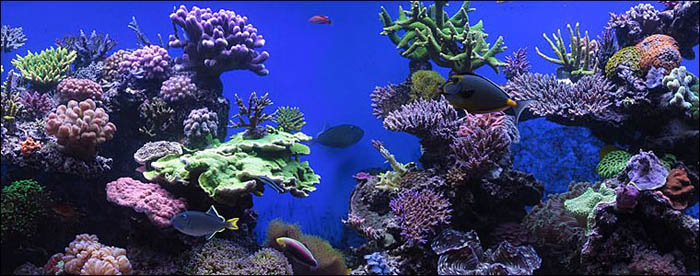 Ultimate Reef Tank Of The Month May 2011 Vince S