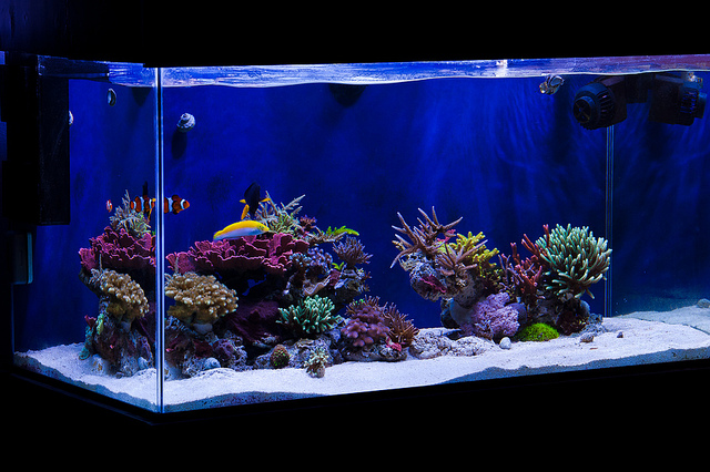 Reef Aquariums Related Keywords & Suggestions - Aquascaping Reef ...