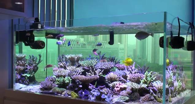 Reef Tools Reef Aquarium Reef Tank Reef Product