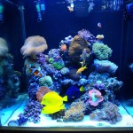Orphek-Reef-aquarium-lighting