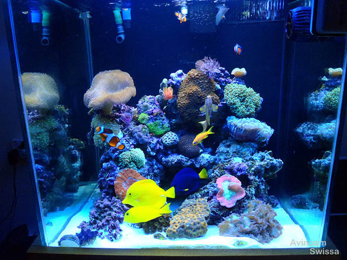 The next generation in pendant led lights orphek dip for Saltwater fish tank lights